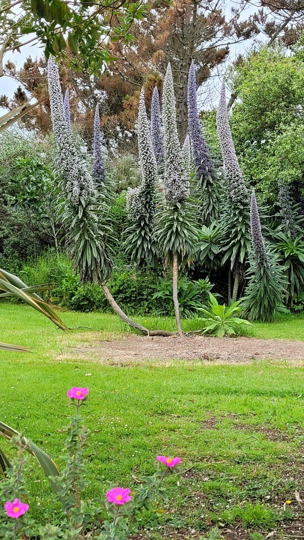 Le jardin de l île